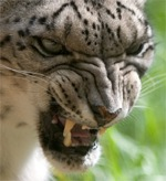 Обновление Mac OS X 10.6 Snow Leopard
