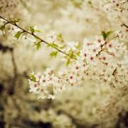bloom_one_ipad
