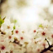 bloom_two_ipad